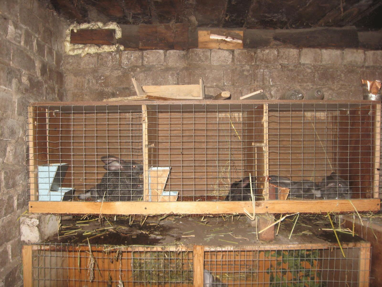 Сарай для кроликов фото