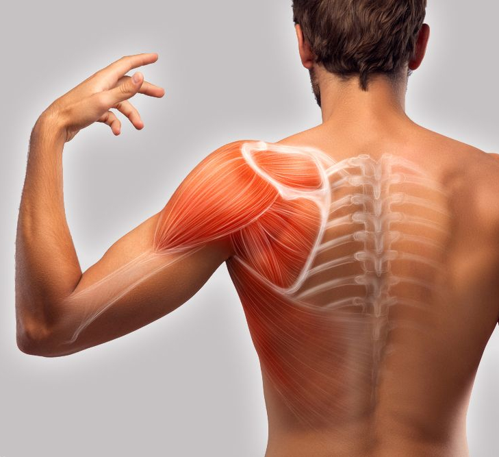 Как понять что болит позвоночник или мышцы фото