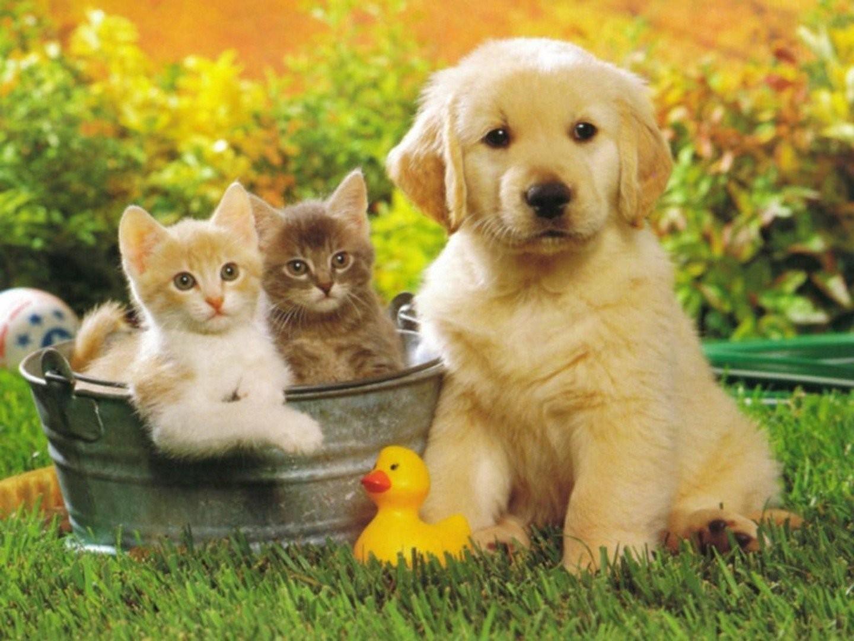милые домашние животные картинки