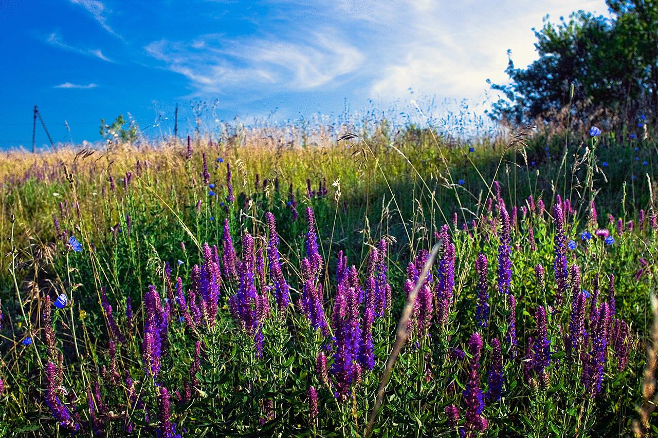 этом заключается травы которые растут на лугу фото тому же