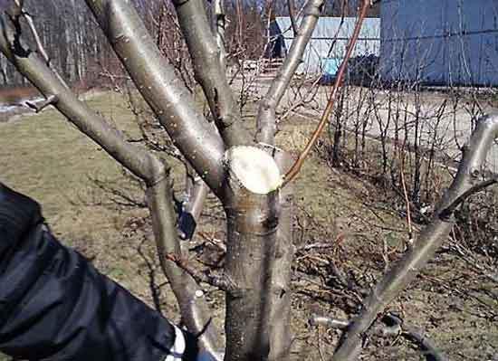 Что делать с яблонями весной видео