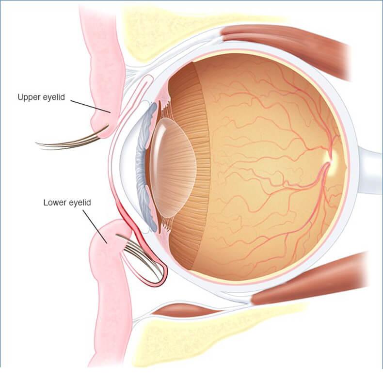 ГЛАУКОМА: потерю зрения можно замедлить или предупредить